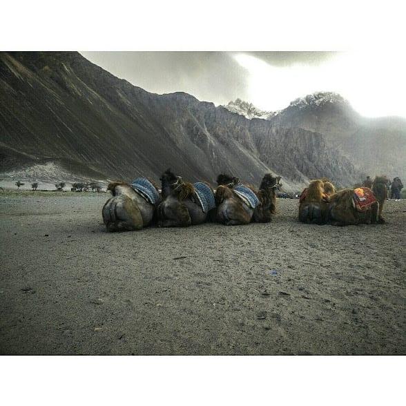 Kashmir travel stories: sand dunes of Nubra