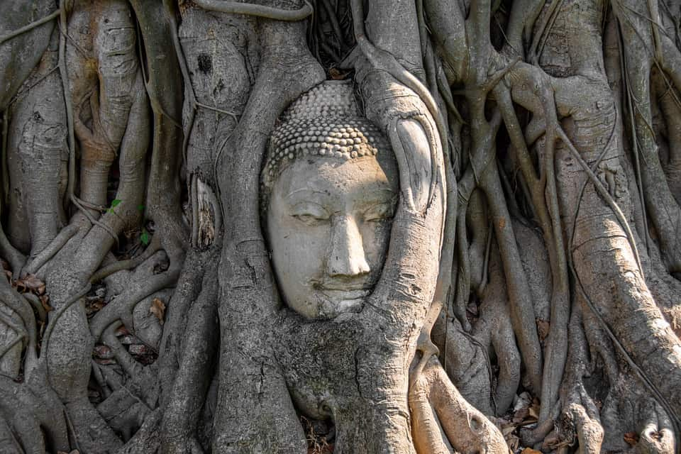 giant buddha head ayuthaya