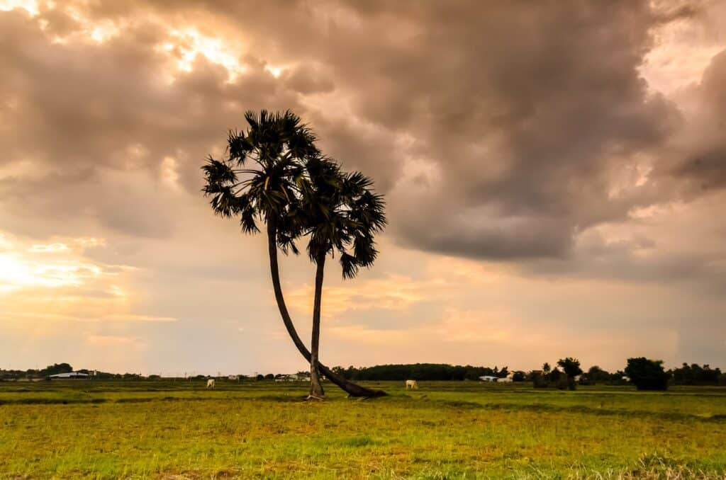 cambodia parks