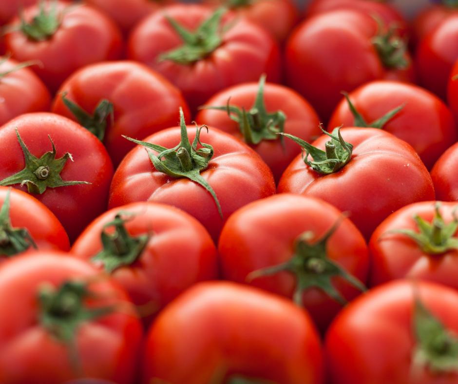 A giant tomato fight