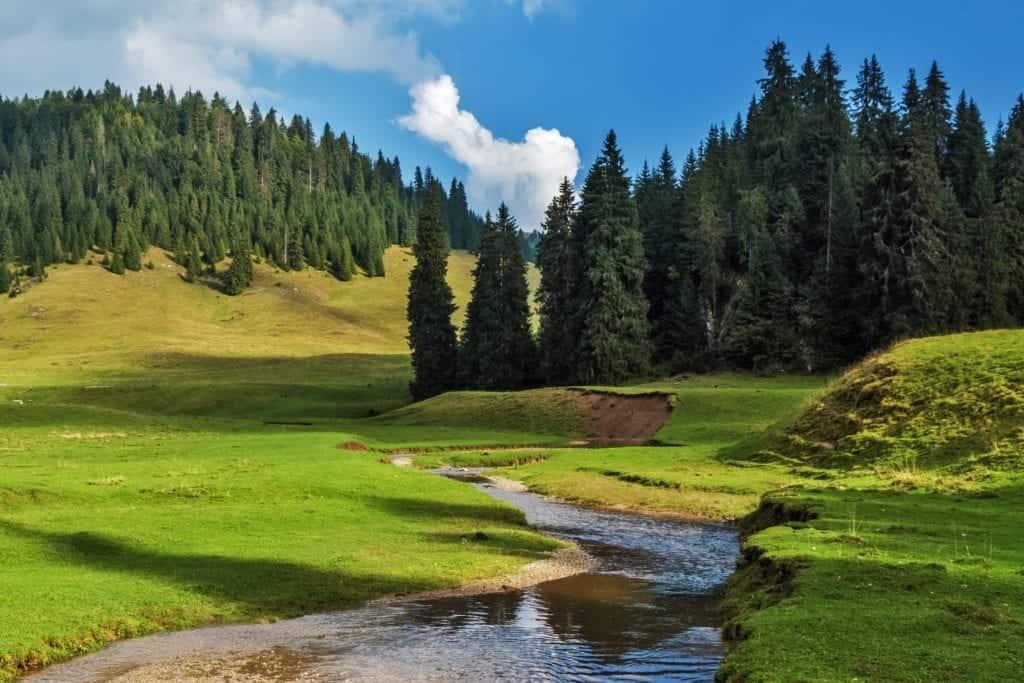 Romania meadows