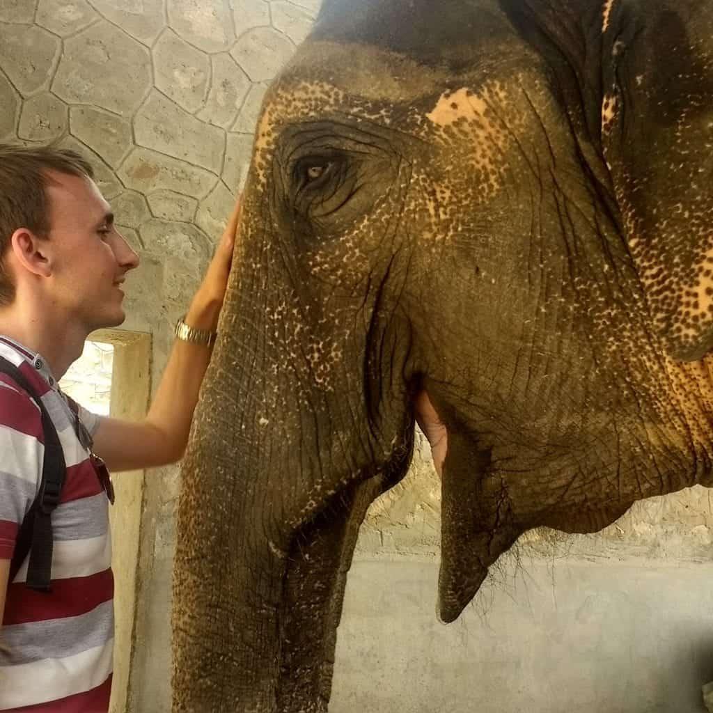 Elephant smiling