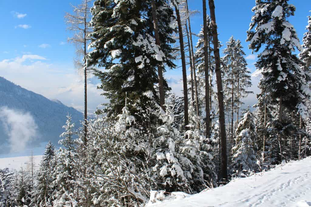 alpbach austria
