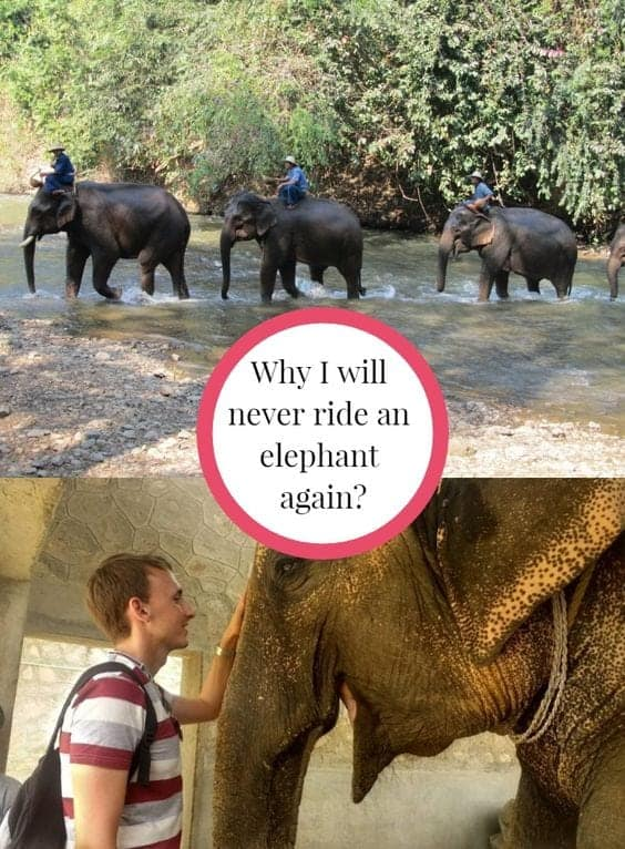 truth about elephant riding