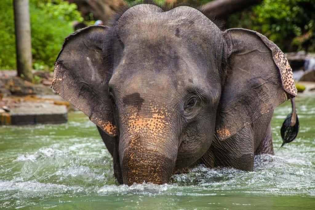 avoid elephant rides