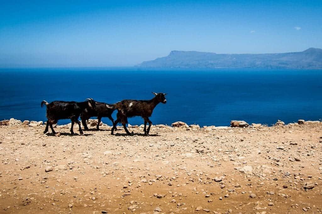 crete goats view