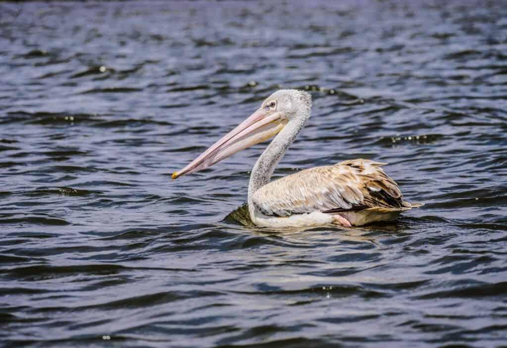 pelican lake hidden gems in minnesota
