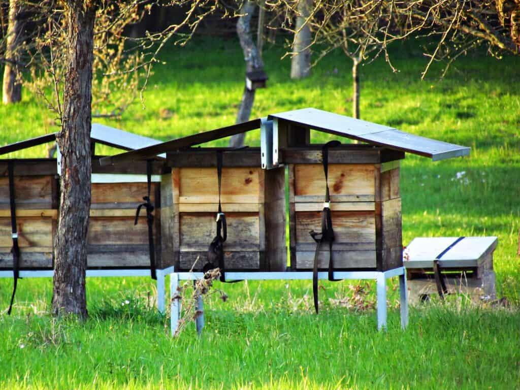beehives jardin du luxembourg