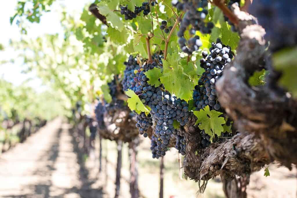 niagara falls vineyards