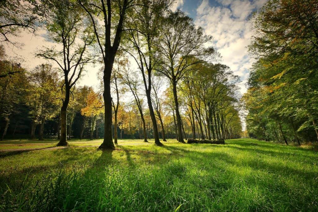 natural park acorns