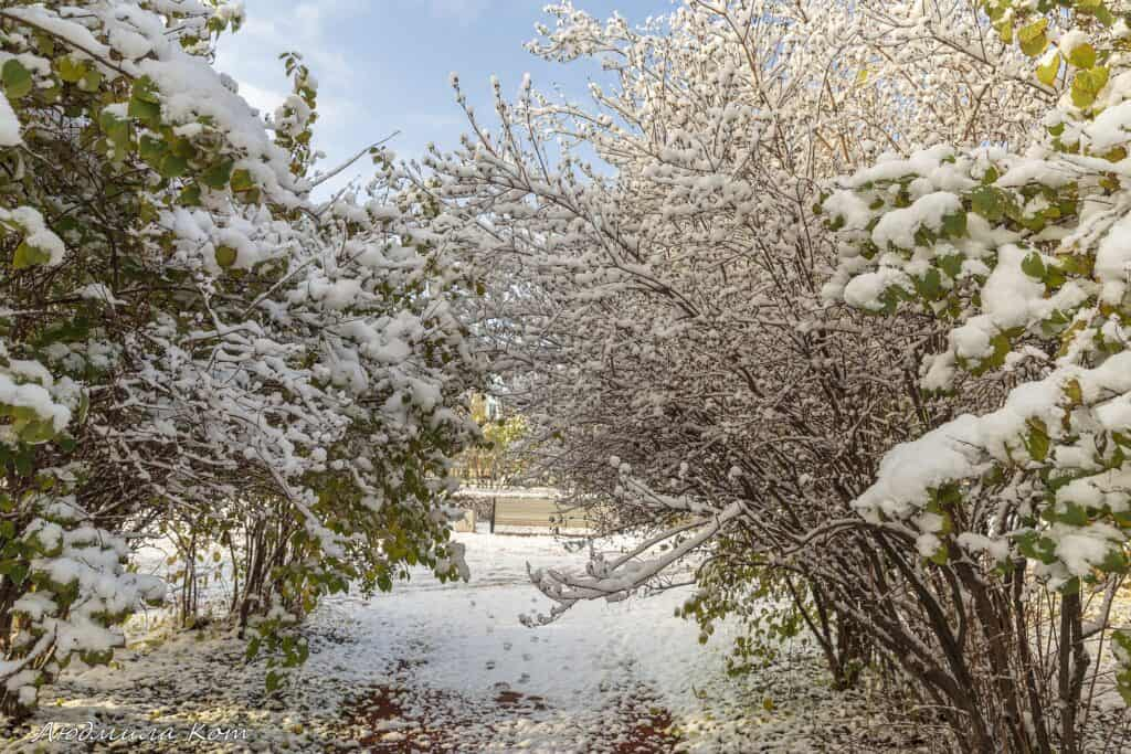 tsarskoye selo snow