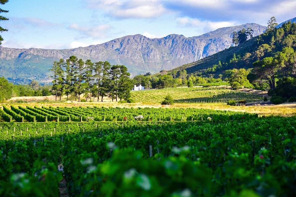 wine route 62
