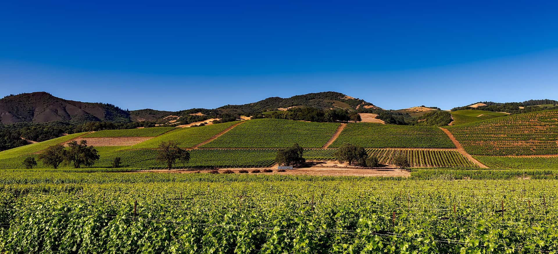 3 Perfect Days in Napa Valley- A Weekend Road Trip Guide