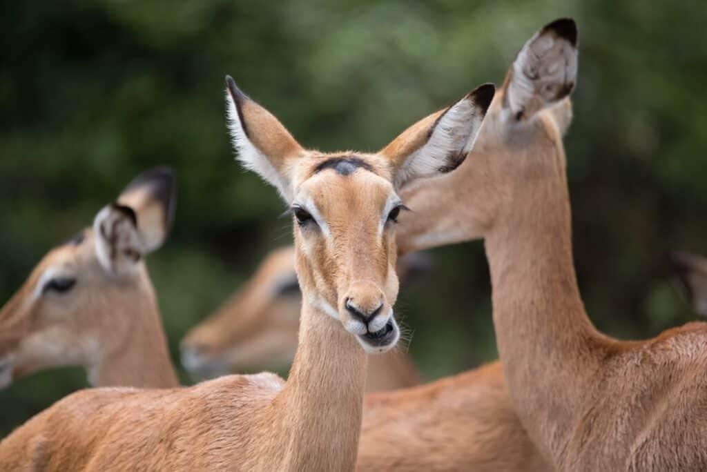 Shirivan National Park