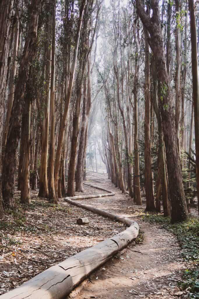 san francisco Lovers' Lane Trail