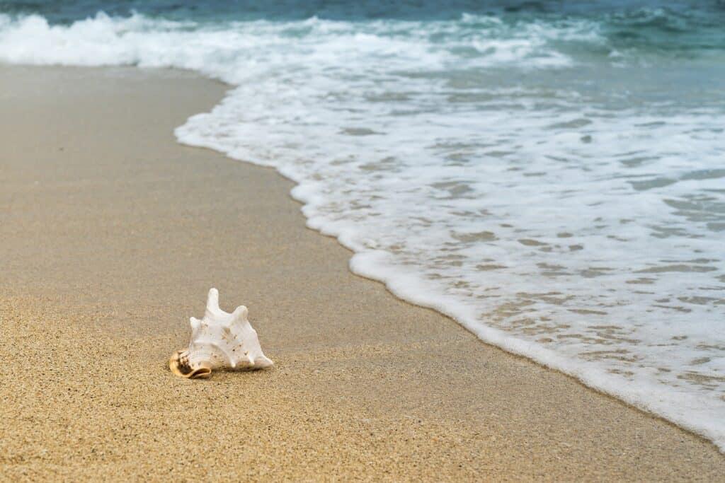shellfish 3062011 1920
