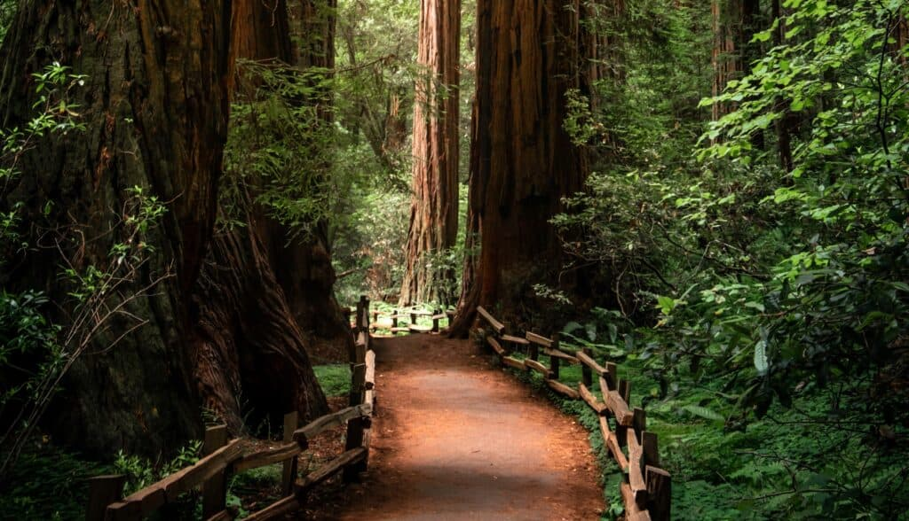 redwood creek trail san francisco