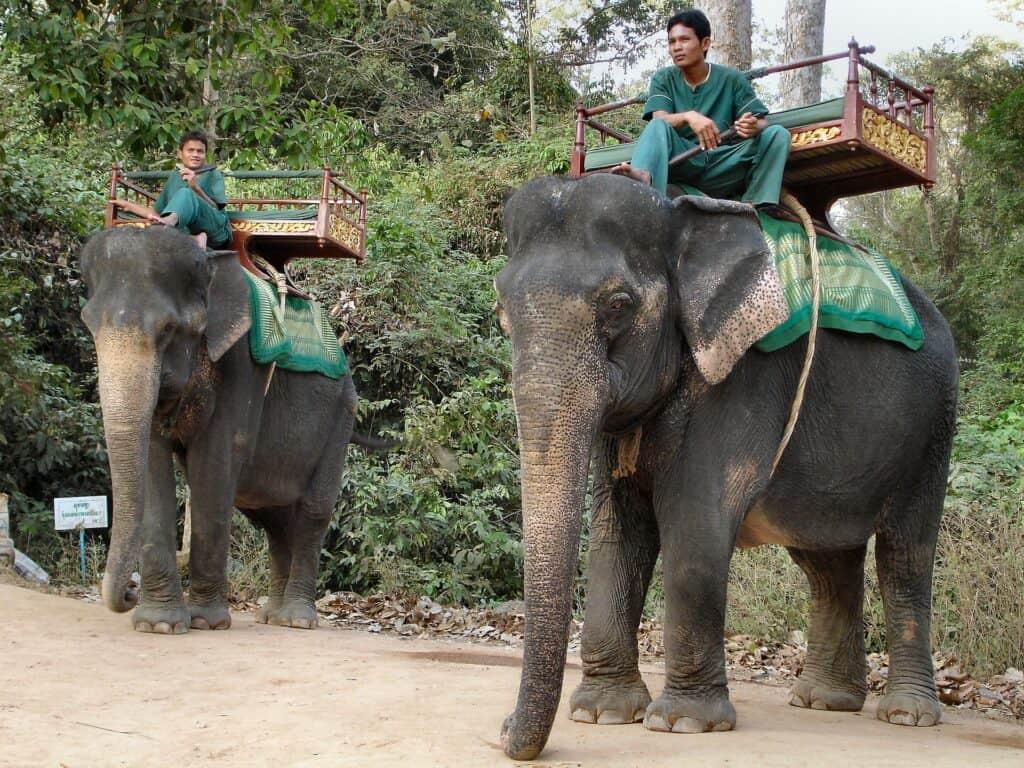 cambodia elephants