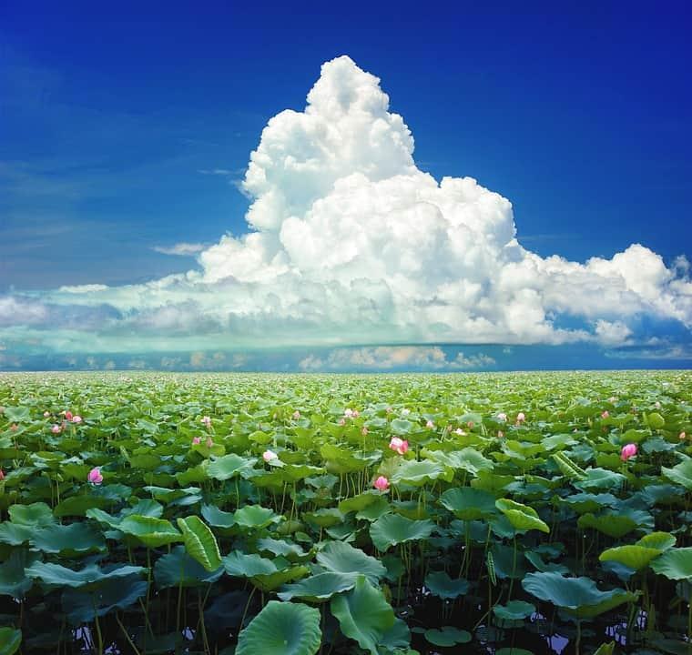lotus lagoon bali