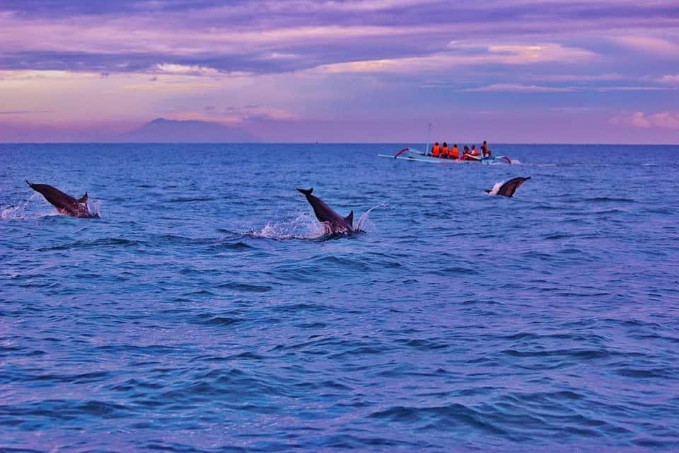 bali bucket list dolphins