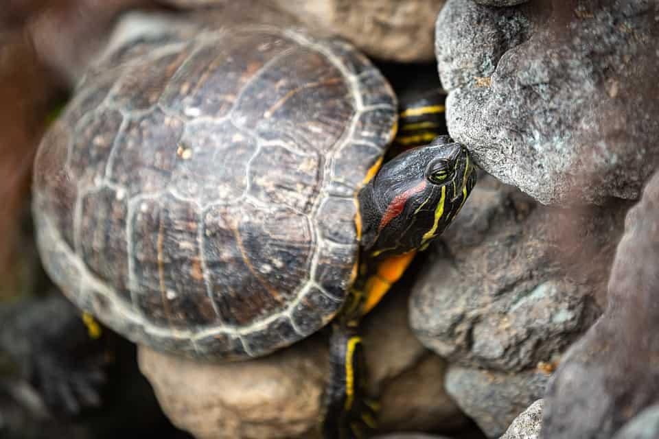 seangen turtles bali