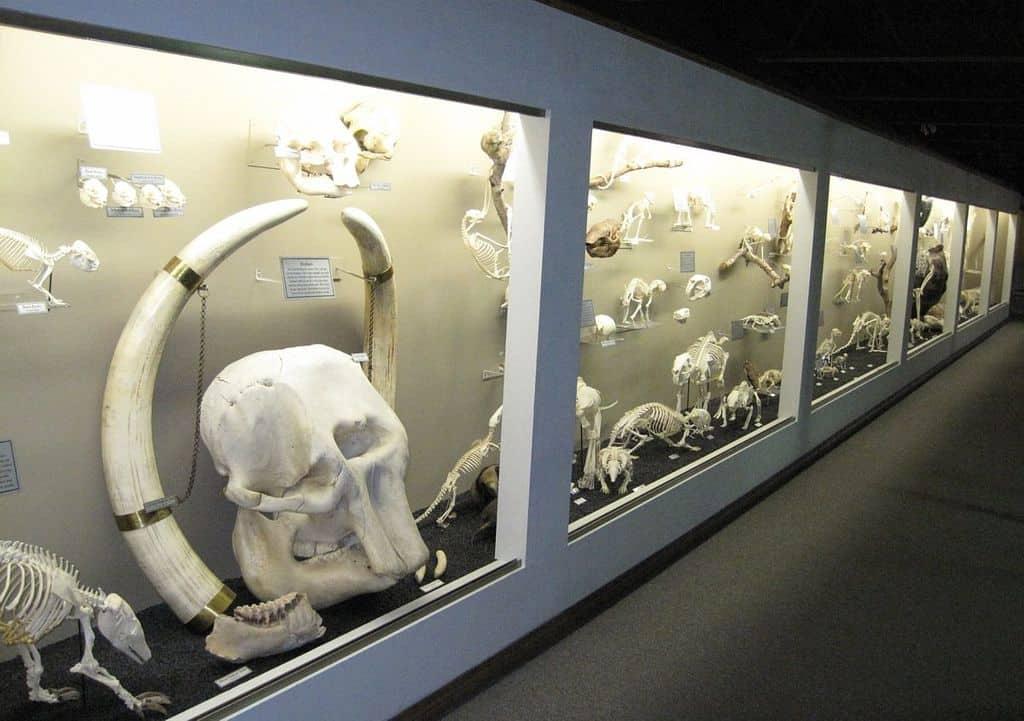museum of osteology orlando