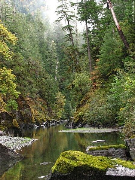 copper salmon wilderness
