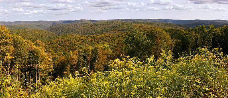 susquehannock state forest